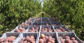 2022330_les-fruits-et-legumes-de-provence-lourdement-frappes-par-la-meteo-web-tete-0211223170096